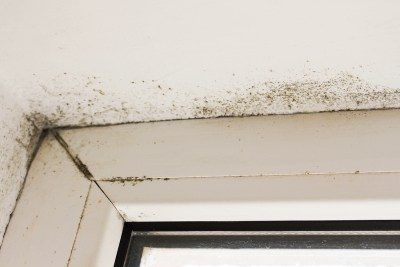 You Have Seen Mold In Your House